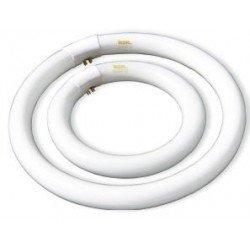 Tubo Fluorescente CFL Circular T9, 40w, Lumen 2560, tono 6400k,  Caja de 4 uds